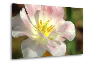 Tulip Pink CU-Robert Goldwitz-Metal Print