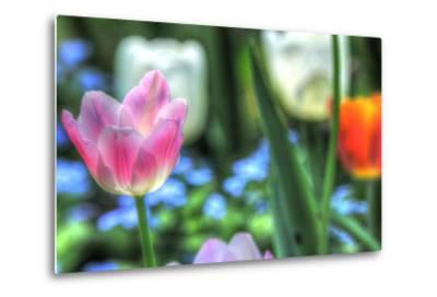 Tulips Four-Robert Goldwitz-Metal Print
