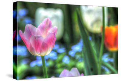 Tulips Four-Robert Goldwitz-Stretched Canvas Print