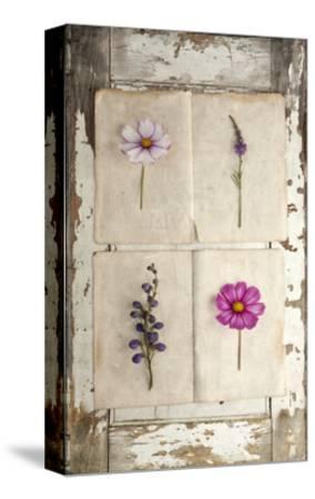 Botanical Board 4-Symposium Design-Stretched Canvas Print