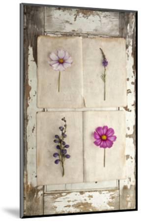 Botanical Board 4-Symposium Design-Mounted Giclee Print