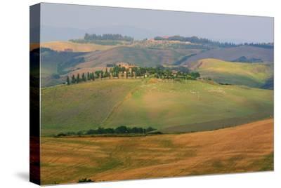 Tuscan Hill Sheep-Robert Goldwitz-Stretched Canvas Print