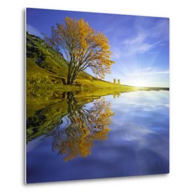 Yellow Tree Reflection-Moises Levy-Metal Print