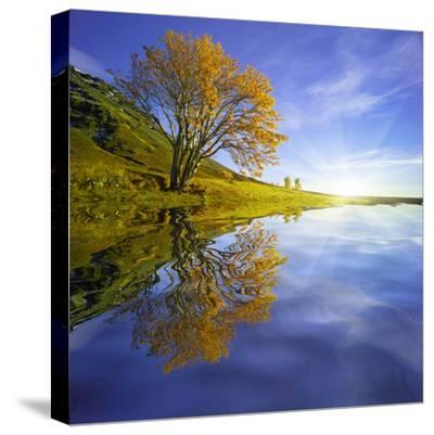 Yellow Tree Reflection-Moises Levy-Stretched Canvas Print