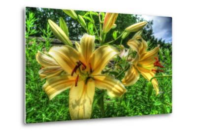June Lilies-Robert Goldwitz-Metal Print