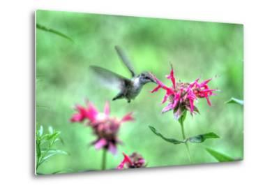 Hummingbird 2-Robert Goldwitz-Metal Print