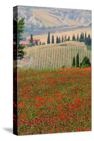 Tuscan Vertical Poppies-Robert Goldwitz-Stretched Canvas Print