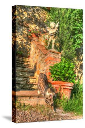Tuscan Vertical Cat on Stairs-Robert Goldwitz-Stretched Canvas Print