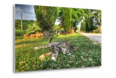 Tuscan Sleepy Cat-Robert Goldwitz-Metal Print
