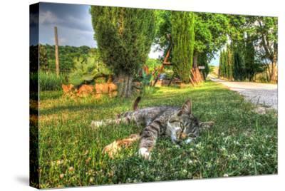 Tuscan Sleepy Cat-Robert Goldwitz-Stretched Canvas Print