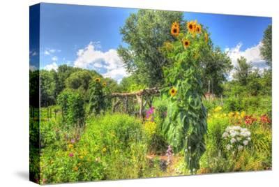 Sunflowers and Garden-Robert Goldwitz-Stretched Canvas Print