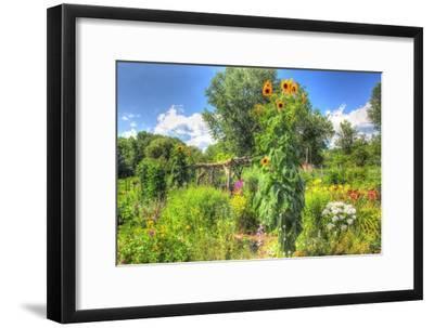 Sunflowers and Garden-Robert Goldwitz-Framed Premium Giclee Print