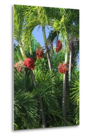 Palm Fruit Vertical-Robert Goldwitz-Metal Print
