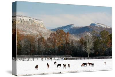 Early Snow Horse Paddock-Robert Goldwitz-Stretched Canvas Print