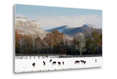 Early Snow Horse Paddock-Robert Goldwitz-Metal Print