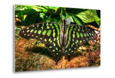 Butterfly 3-Robert Goldwitz-Metal Print