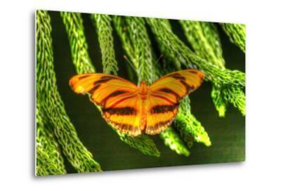 Butterfly 4-Robert Goldwitz-Metal Print