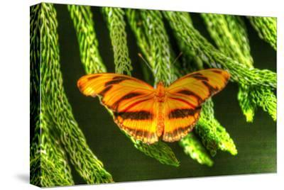 Butterfly 4-Robert Goldwitz-Stretched Canvas Print