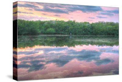 Heron and Mangroves-Robert Goldwitz-Stretched Canvas Print