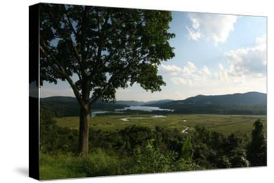 Hudson Highlands Tree Boscobell-Robert Goldwitz-Stretched Canvas Print