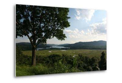 Hudson Highlands Tree Boscobell-Robert Goldwitz-Metal Print