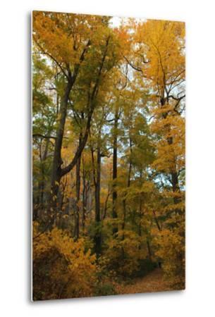 Inwood Park Fall Vertical-Robert Goldwitz-Metal Print