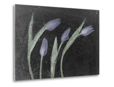 Tulipanes Azules-Moises Levy-Metal Print