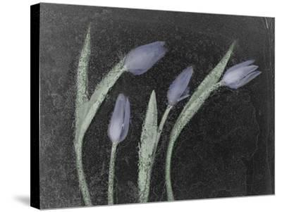 Tulipanes Azules-Moises Levy-Stretched Canvas Print