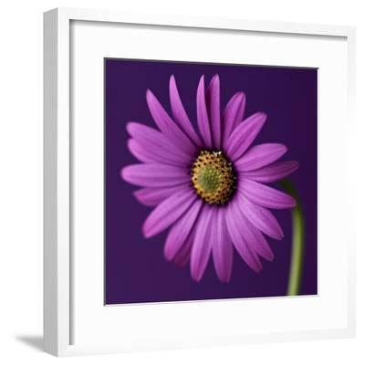 Flower-Symposium Design-Framed Giclee Print