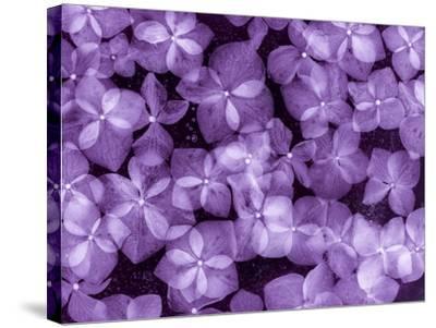 Flores Congeladas 200-Moises Levy-Stretched Canvas Print