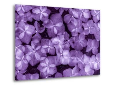 Flores Congeladas 200-Moises Levy-Metal Print