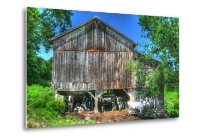 Old Barn and Cows-Robert Goldwitz-Metal Print
