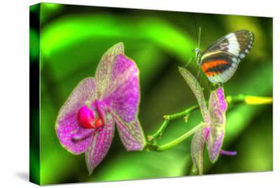 Butterfly 7-Robert Goldwitz-Stretched Canvas Print