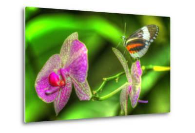 Butterfly 7-Robert Goldwitz-Metal Print