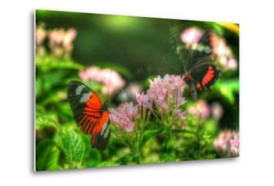 Butterfly 11-Robert Goldwitz-Metal Print