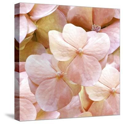 Innocence Pattern-Tina Lavoie-Stretched Canvas Print