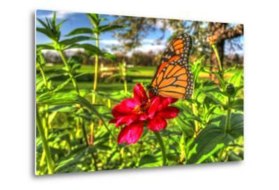 Butterfly 15-Robert Goldwitz-Metal Print