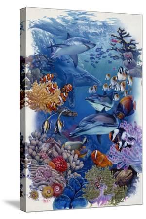 Reef-Tim Knepp-Stretched Canvas Print