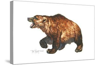 Cave Bear-Tim Knepp-Stretched Canvas Print