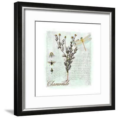 Chamomile Herb-Tina Lavoie-Framed Giclee Print