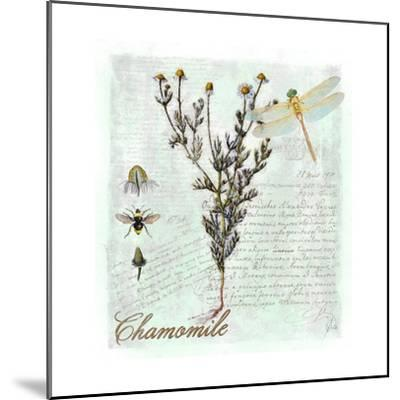 Chamomile Herb-Tina Lavoie-Mounted Giclee Print