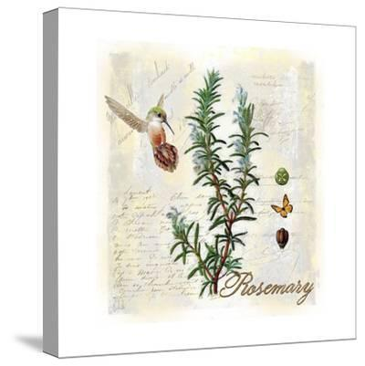 Rosemary Herb-Tina Lavoie-Stretched Canvas Print
