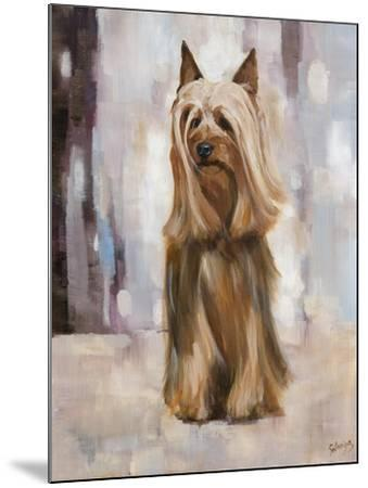 Silky Terrier I-Solveiga-Mounted Giclee Print