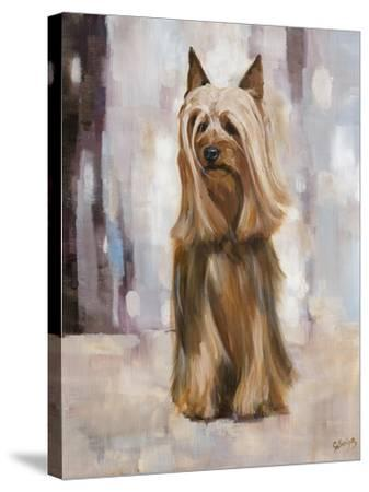 Silky Terrier I-Solveiga-Stretched Canvas Print