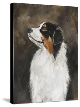 Australian Shepherd-Solveiga-Stretched Canvas Print