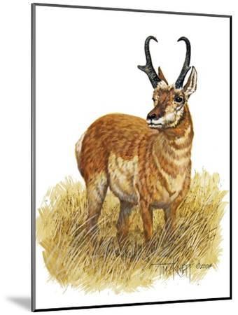 Pronghorn-Tim Knepp-Mounted Giclee Print