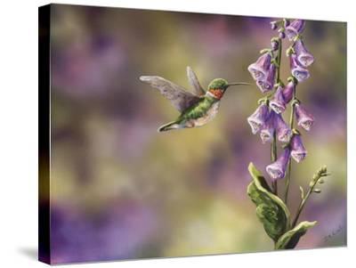 Spring Hummingbird-Sarah Davis-Stretched Canvas Print