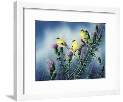 American Goldfinch and Thistle-Wanda Mumm-Framed Giclee Print