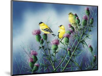 American Goldfinch and Thistle-Wanda Mumm-Mounted Giclee Print