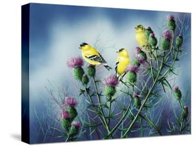 American Goldfinch and Thistle-Wanda Mumm-Stretched Canvas Print
